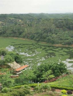 看草原何必遠行,浦北越州天湖就有一個!