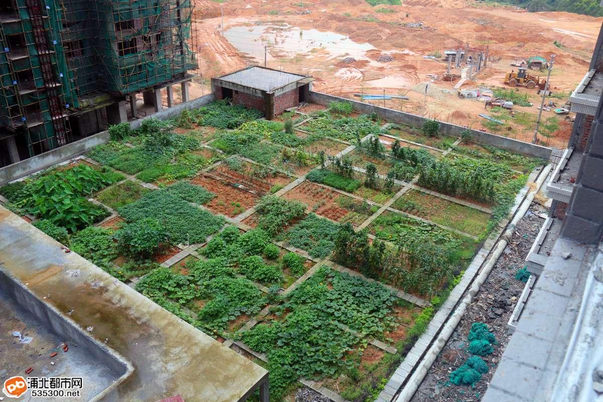 360°航拍深澳建材商住城,浦北首个空中菜园建成