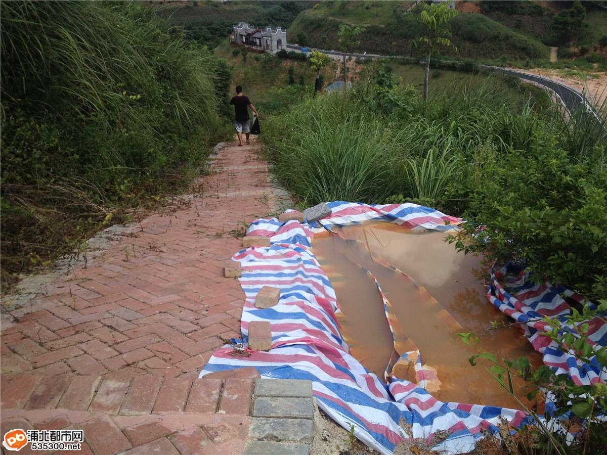 浦北五仙湖公园捻子遍地,是个观景摘果的好地方