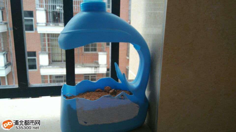 太有才了!浦北东方丽园一户主竟这样玩转洗衣液瓶