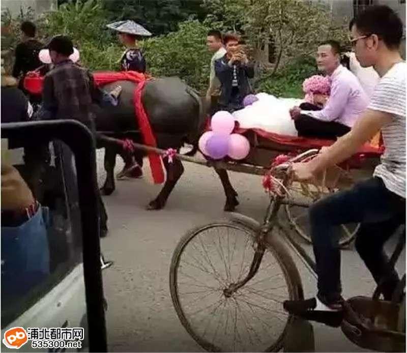 武利镇史上最牛逼婚礼,婚车竟是牛车和28杠