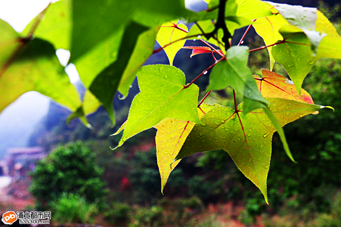 浦北三合�錾�生态园