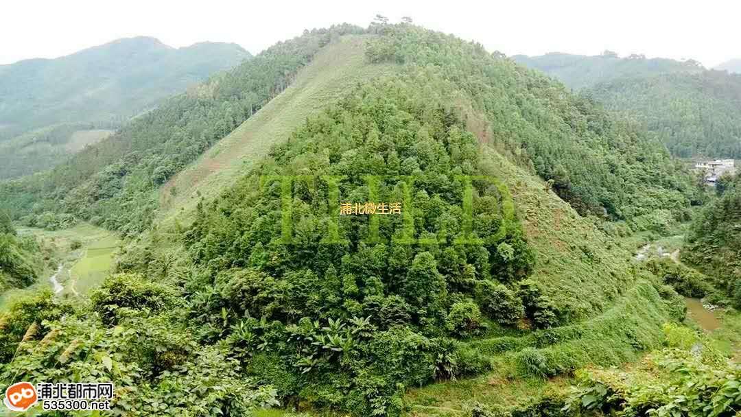 壁纸 成片种植 风景 植物 种植基地 桌面 1080_608