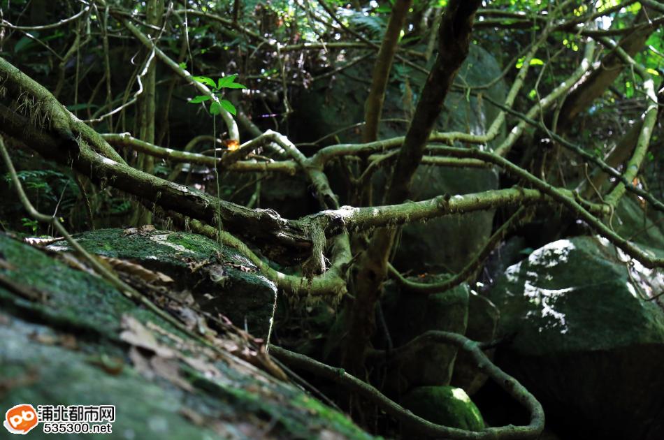 穿越五皇山原始森林峡谷,寻找土匪黄三爷生活过的石洞穿越五皇山原始森林峡谷,寻找土匪黄三爷生活过的石洞