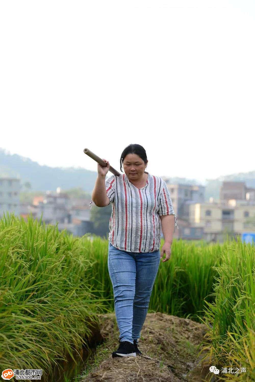 浦北福旺李燕萍出名了,十里八乡都在夸她!