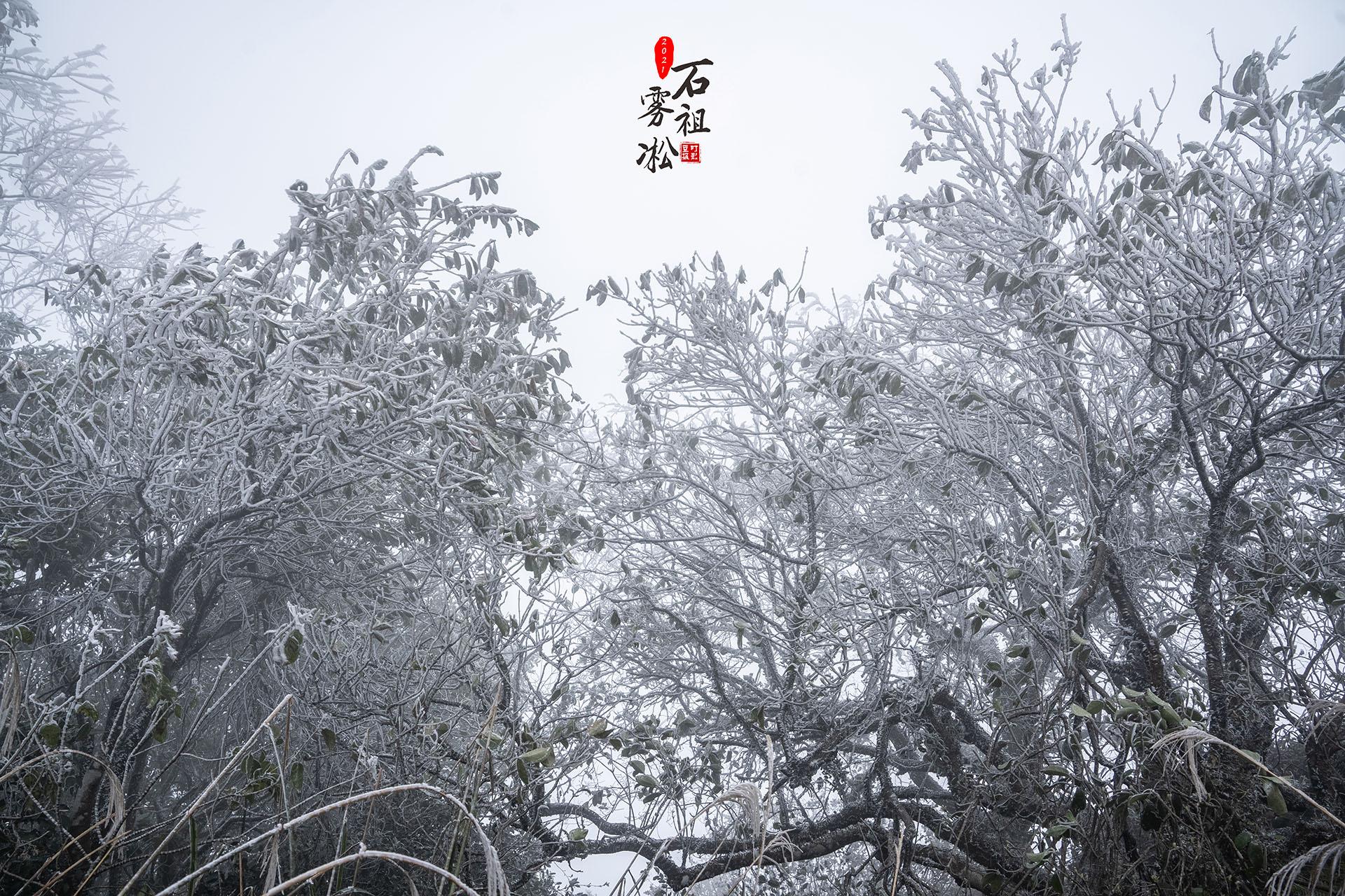20210108石祖雾淞美景艺术4.jpg