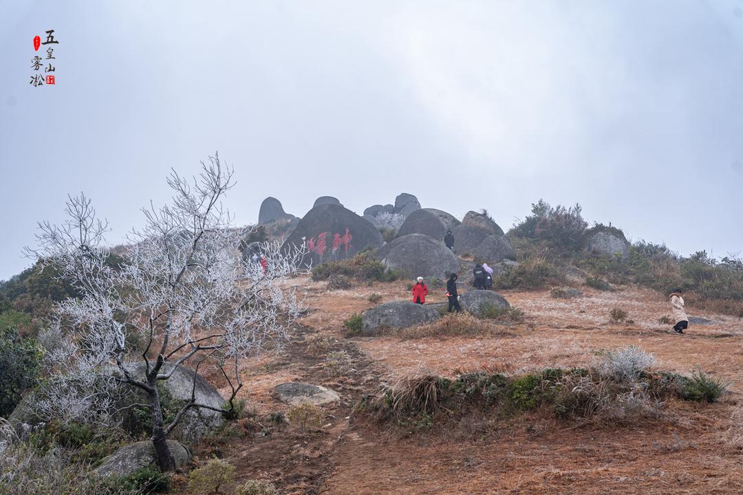 20210108五皇雾凇美景10.jpg