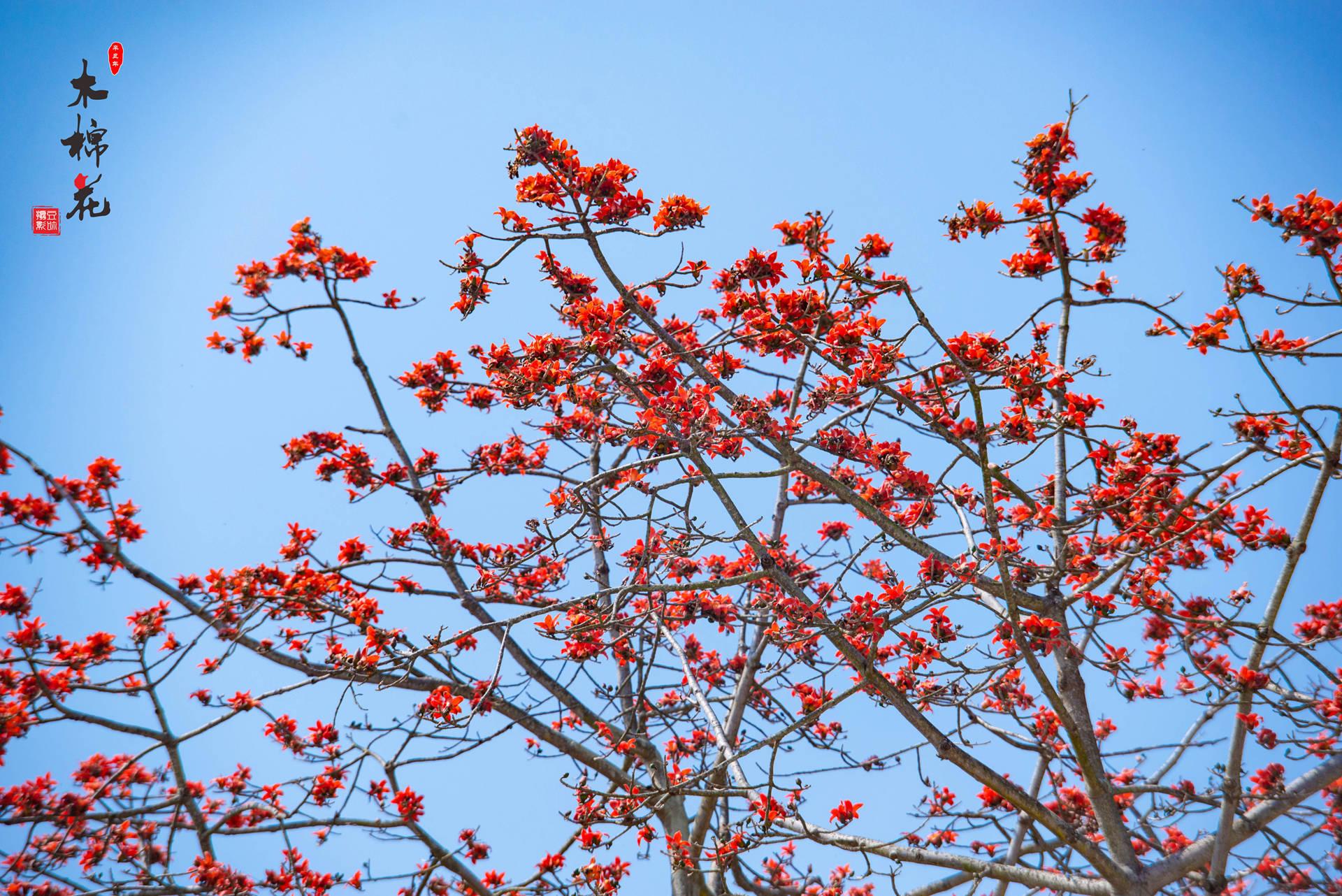 木棉花与鸟的故事11.jpg