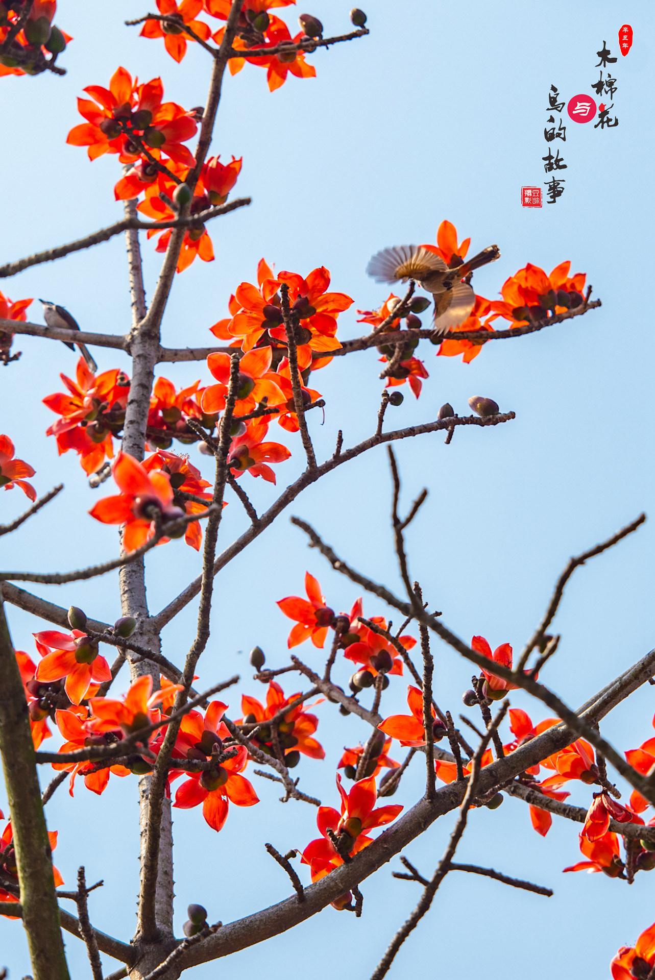 木棉花与鸟的故事15.jpg