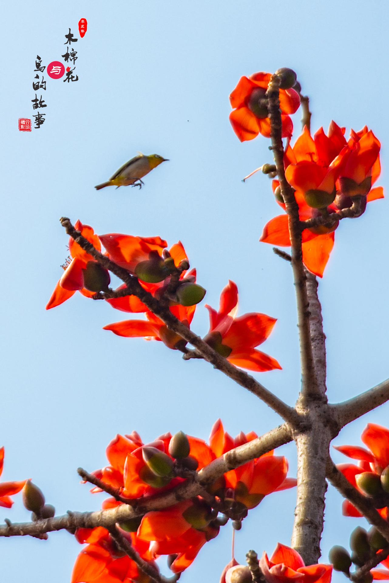 木棉花与鸟的故事17.jpg