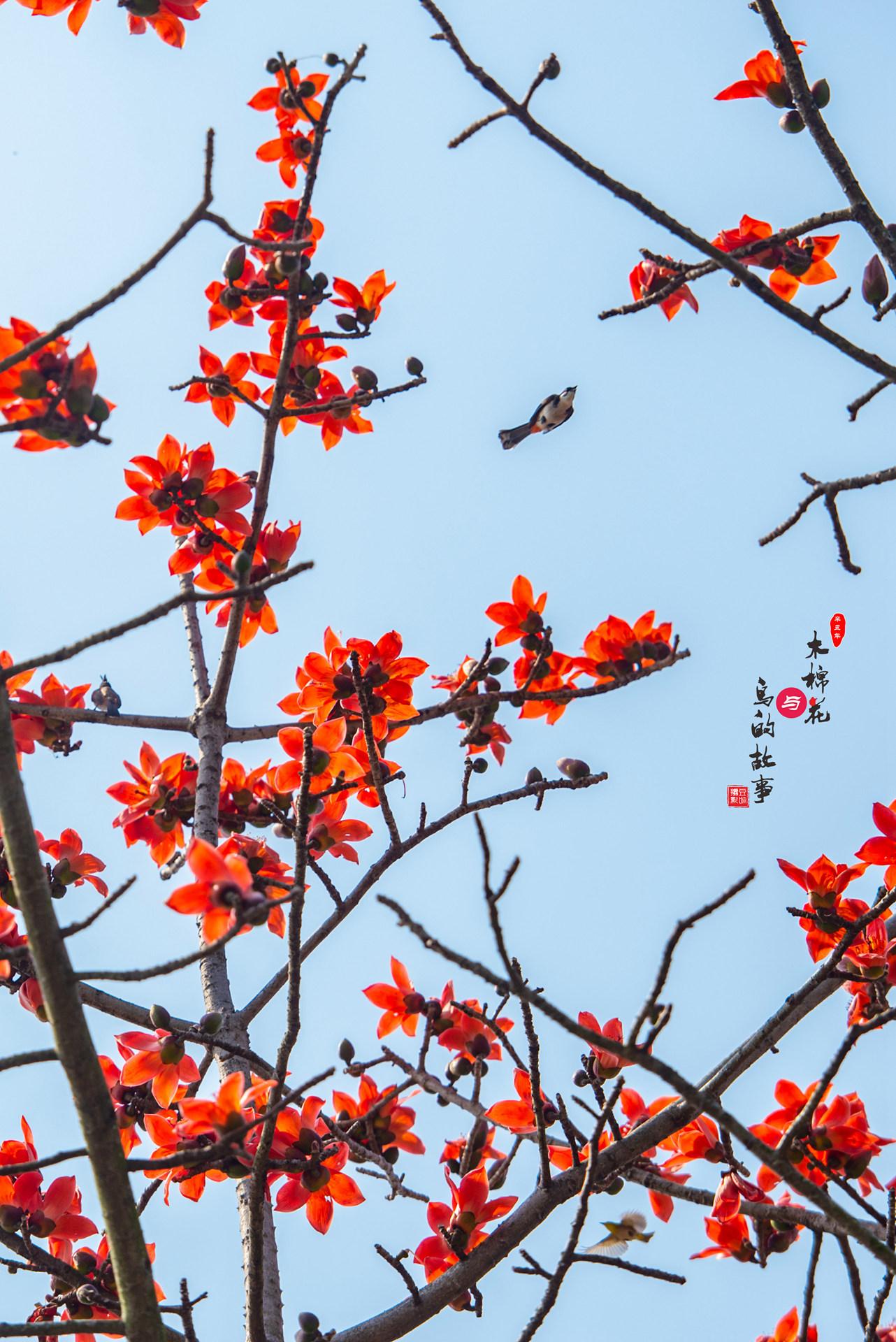 木棉花与鸟的故事16.jpg