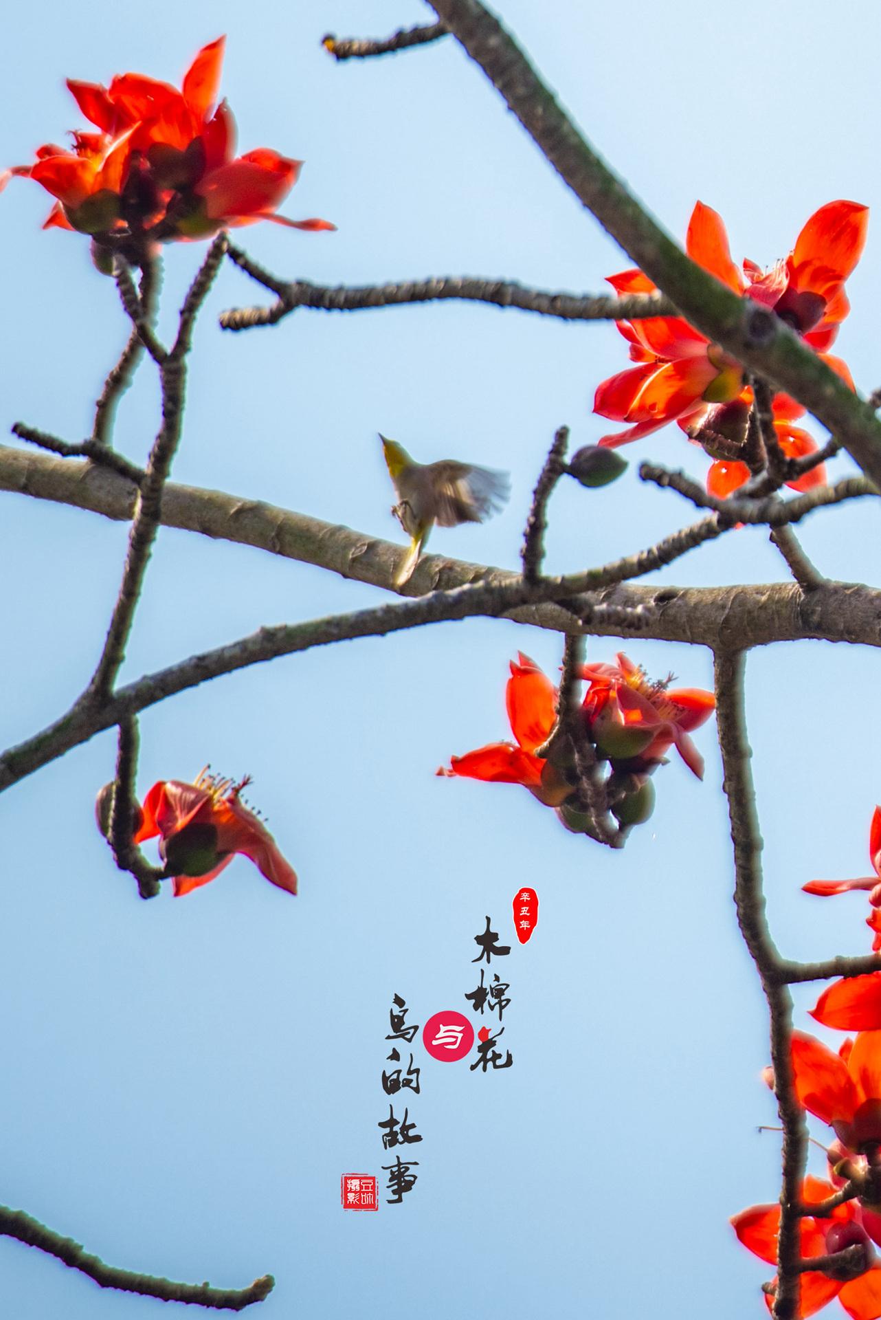 木棉花与鸟的故事19.jpg