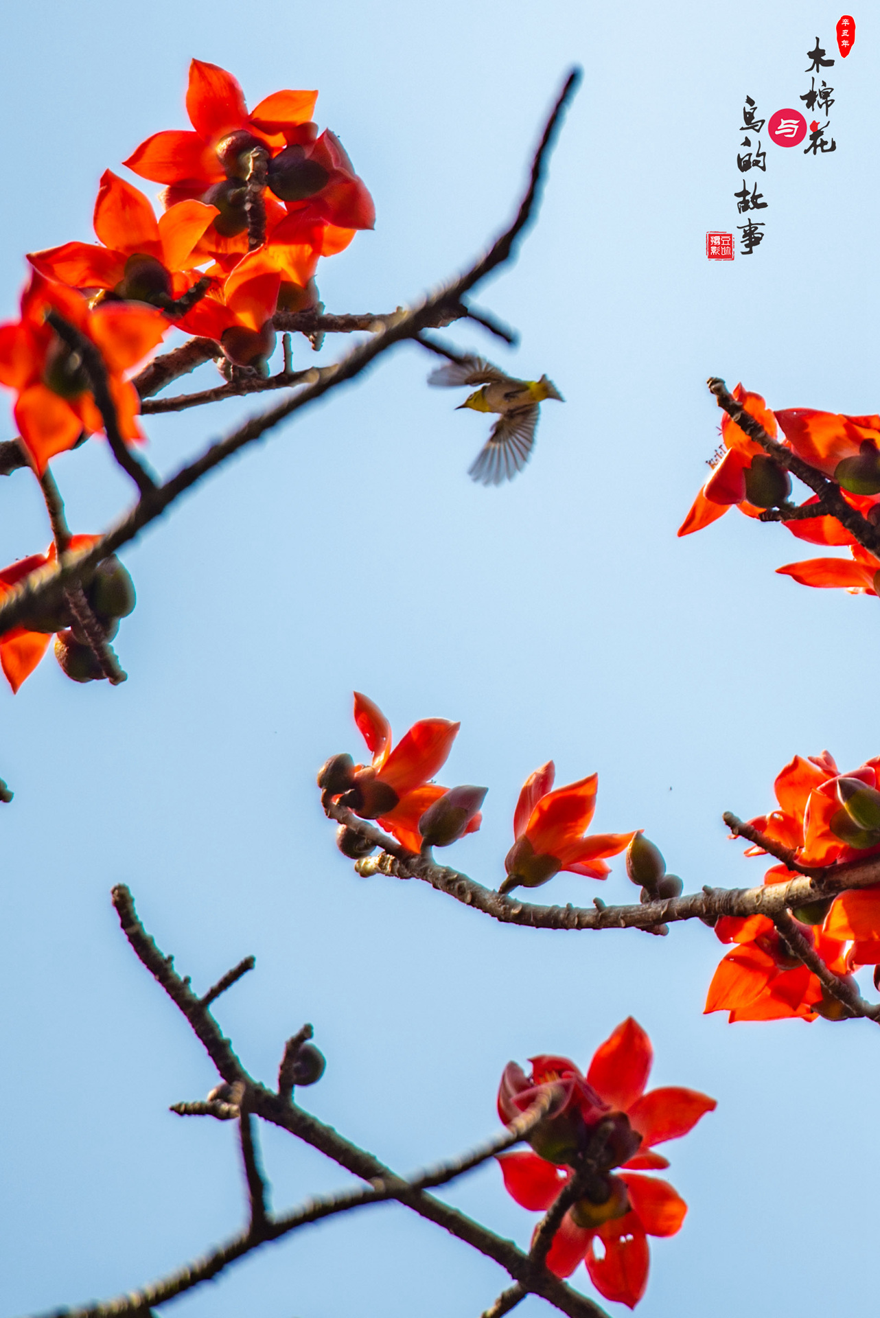 木棉花与鸟的故事18.jpg