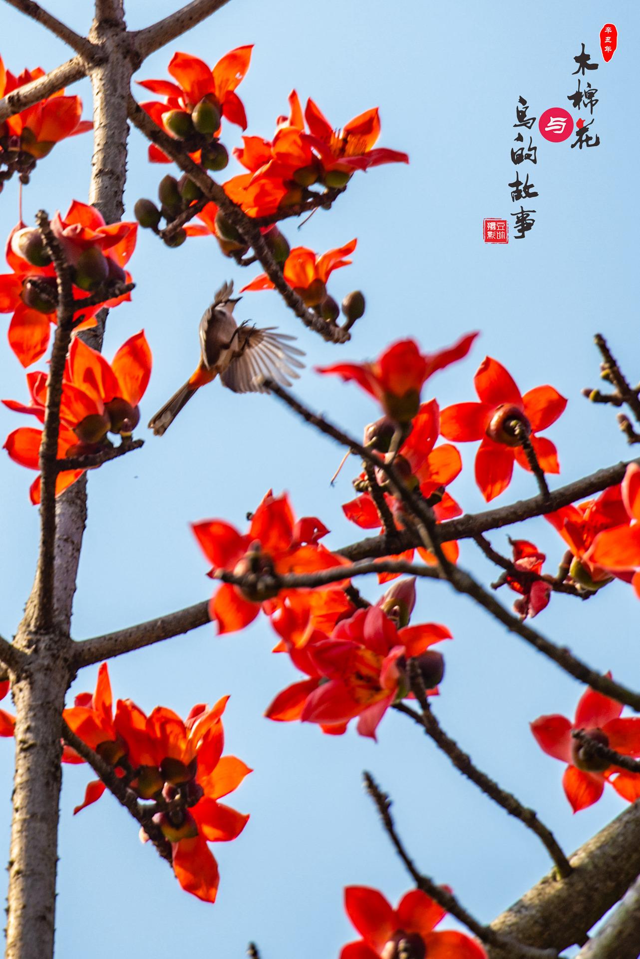 木棉花与鸟的故事20.jpg