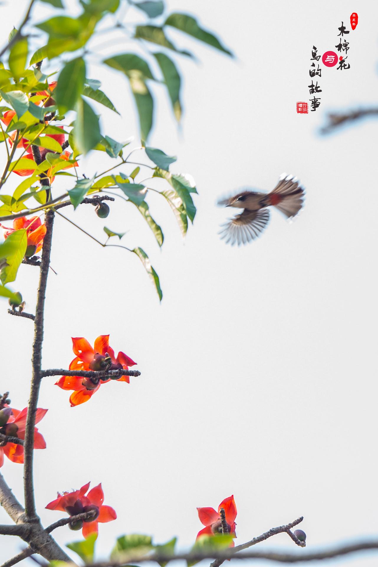 木棉花与鸟的故事26.jpg