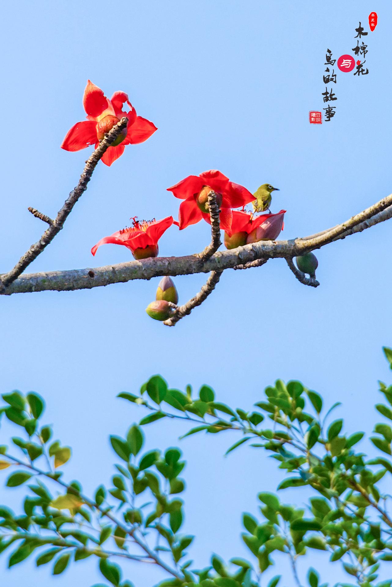 木棉花与鸟的故事25.jpg