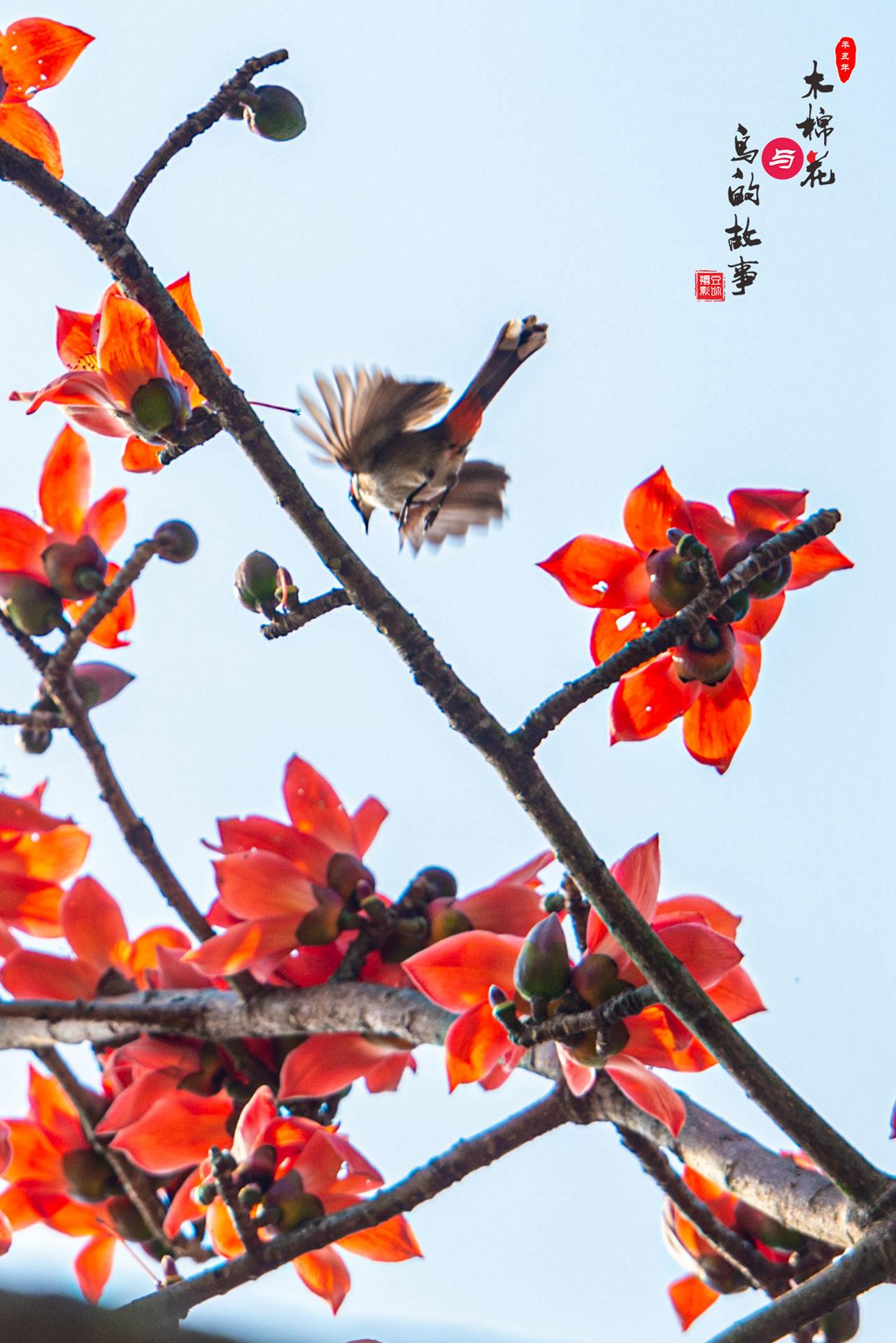 木棉花与鸟的故事29.jpg