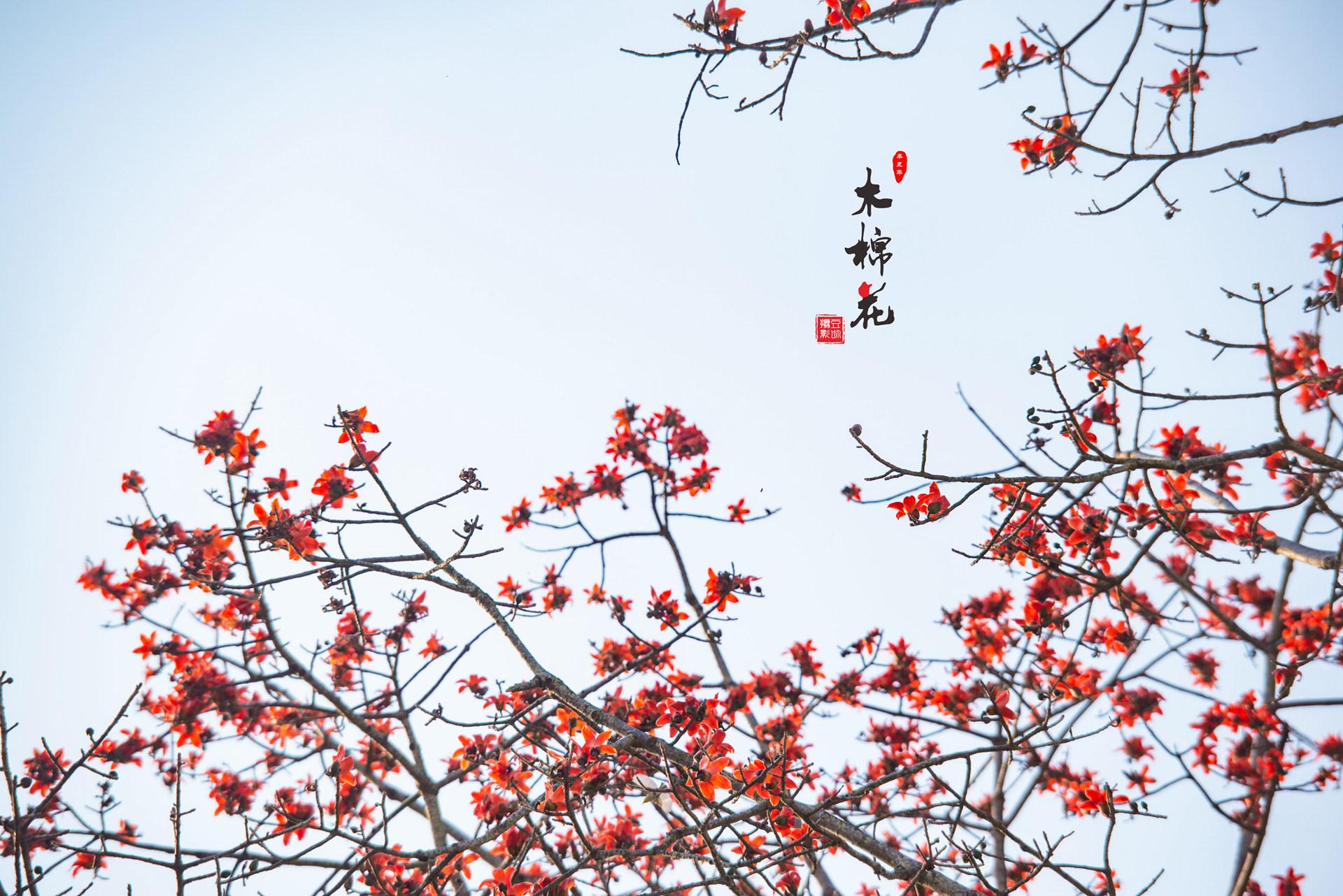 木棉花与鸟的故事35.jpg
