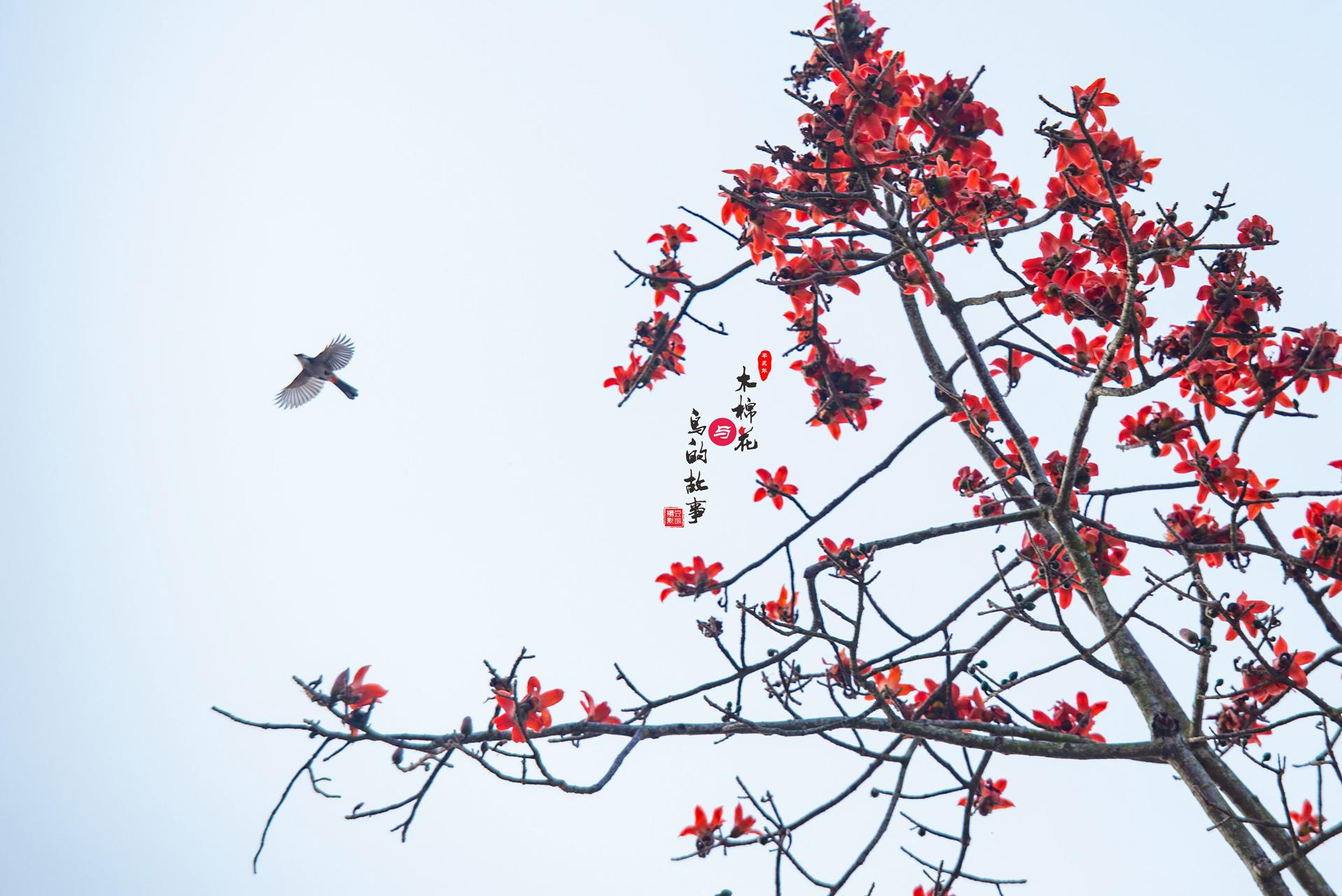 木棉花与鸟的故事40.jpg