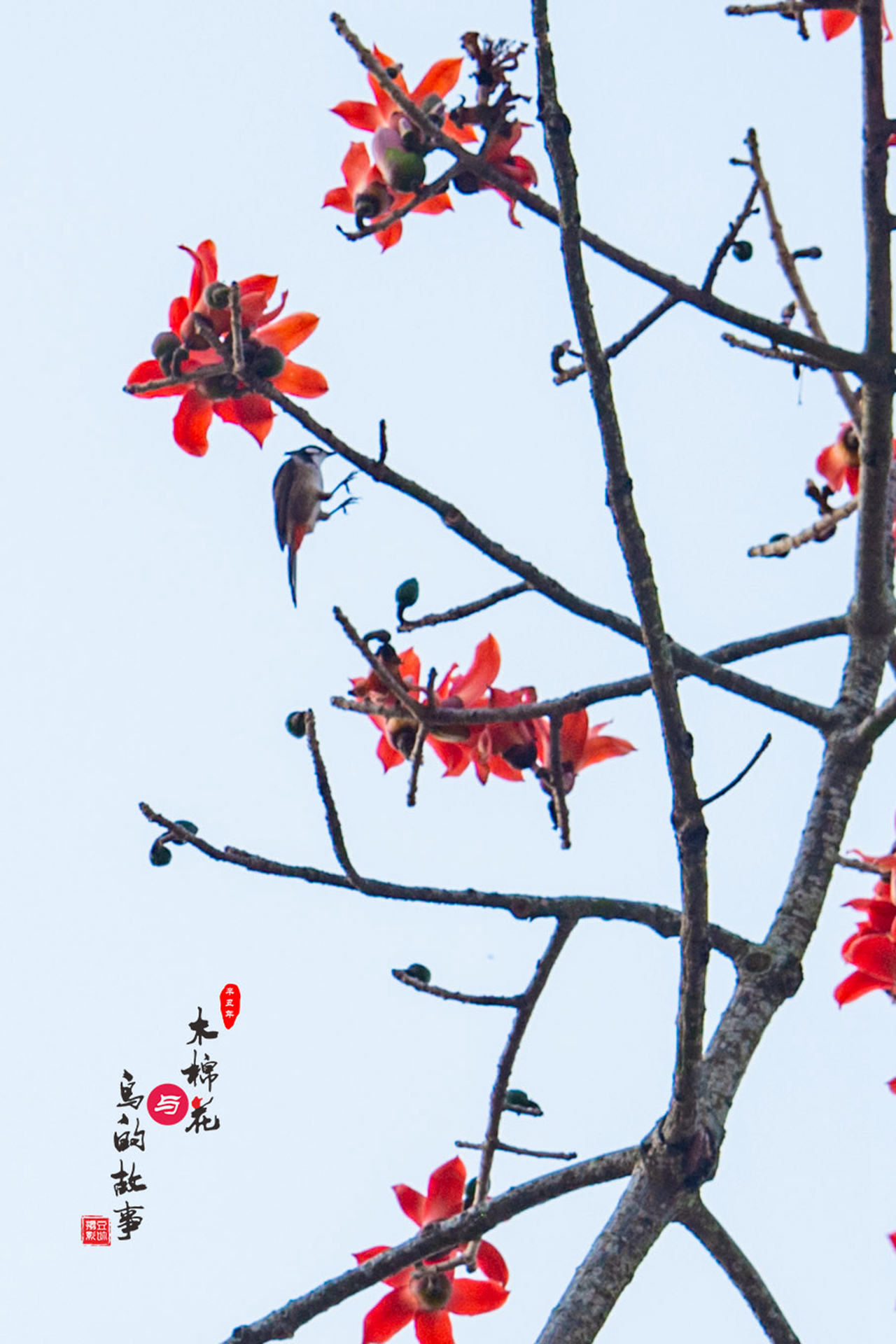 木棉花与鸟的故事41.jpg
