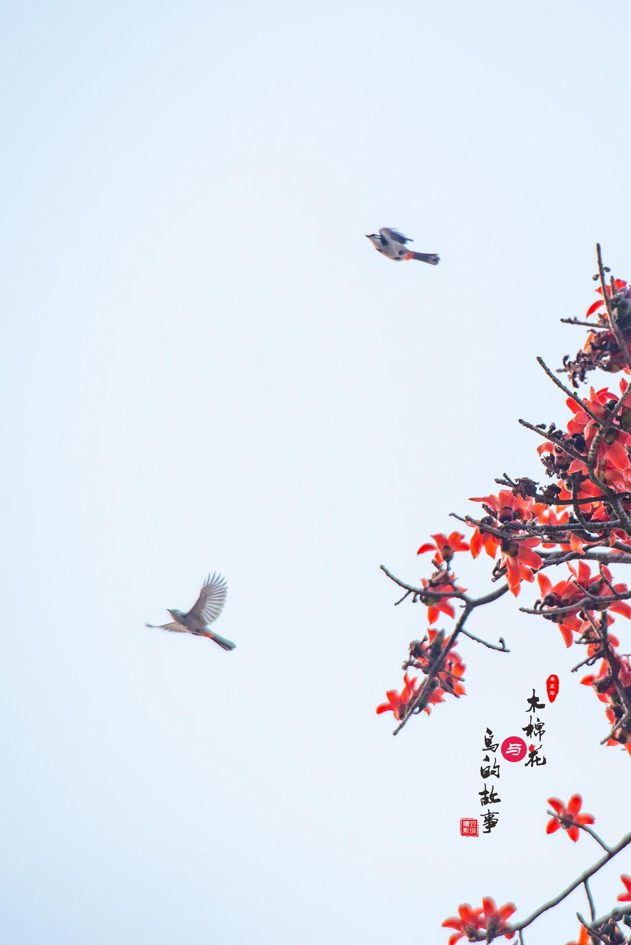 木棉花与鸟的故事43.jpg