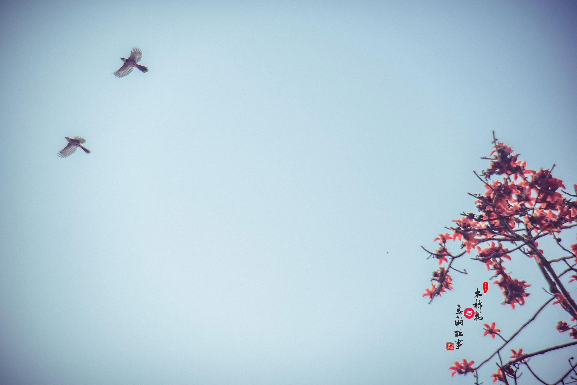 木棉花与鸟的故事44.jpg