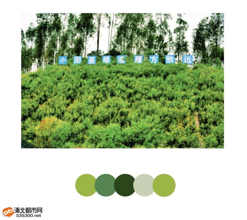 """浦清高速""""巨龙""""日渐成型,鲜艳多色点亮墨绿八桂"""